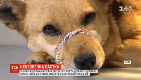 Во Львове от браконьерских ловушек страдают дворовые и домашние собаки