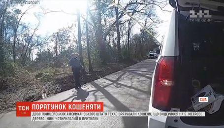 Правоохранители штата Техас спасли из дерева котенка