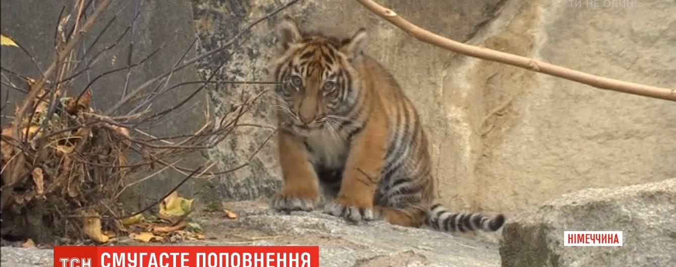 Берлинский зоопарк показал редких тигрят
