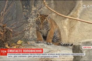 Берлінський зоопарк показав рідкісних тигренят