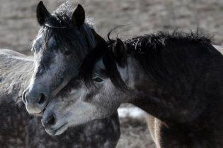 Ферма добра в Черновцах: семья перекупает животных, которых отдают на убой