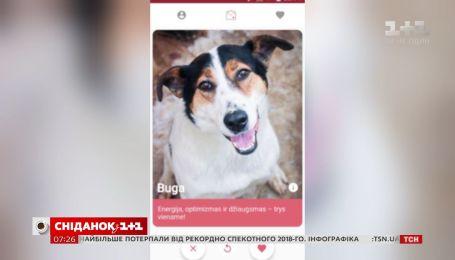 """У Литві створили """"Тіндер"""" для знайомства з собаками"""
