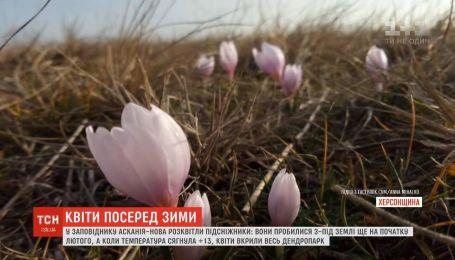 Весна в феврале: территорию заповедника Аскания-Нова укрыли подснежники