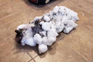 В США спасли заледеневшего котика, которого нашли в снегу