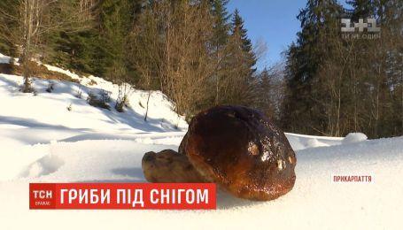 На Прикарпатті під снігом знаходять різні види грибів
