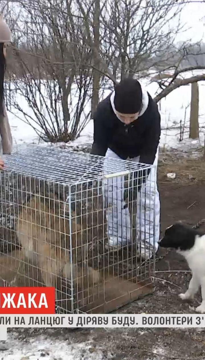 На Черниговщине зоозащитники ринулись на спасение дикого зверя