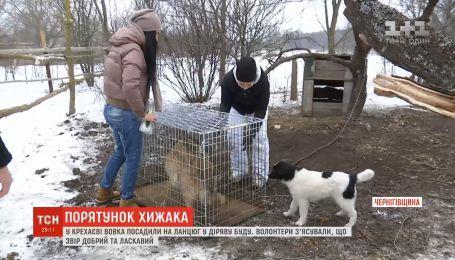 На Чернігівщині зоозахисники кинулися на порятунок дикого звіра