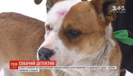 В Хмельницкой области исчезли около сотни уличных и домашних собак