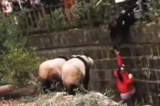 В Китае сняли спасение девочки из вольера с пандами
