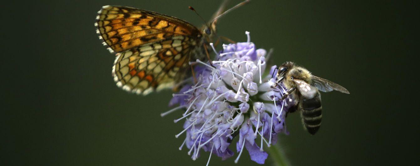 Бджоли мають математичні здібності й індивідуальність - вчені
