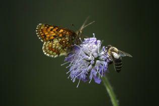 Пчелы обладают математическими способностями и индивидуальностью - ученые