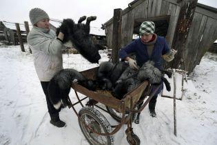 В Україні вже 2025 року можуть зникнути звіроферми