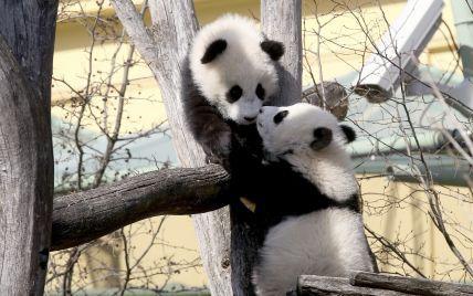 Найстарший у світі віденський зоопарк відкрився для відвідувачів після карантину