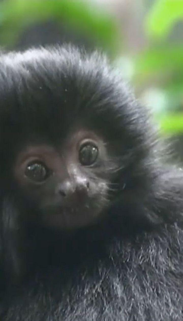 Со зверинца в штате Флорида злоумышленник забрал редкую обезьянку