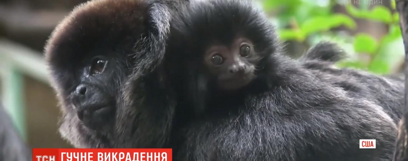В зверинце Флориды прямо из клетки похитили редкую обезьянку