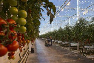 Украина получит 200 млн долларов от Всемирного банка на развитие сельского хозяйства