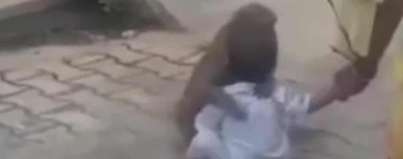В Индии обезьяна похитила мальчика и не отдавала его