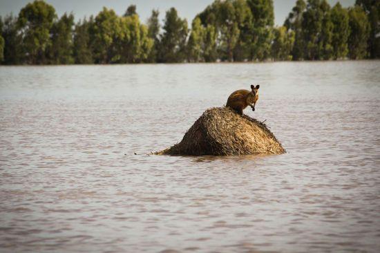 В Австралії вже за кілька десятків років зовсім зникне зима - дослідники