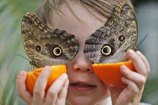 """""""Апокалипсис насекомых"""": экологи рассказали, что может сделать каждый для предотвращения катастрофы"""