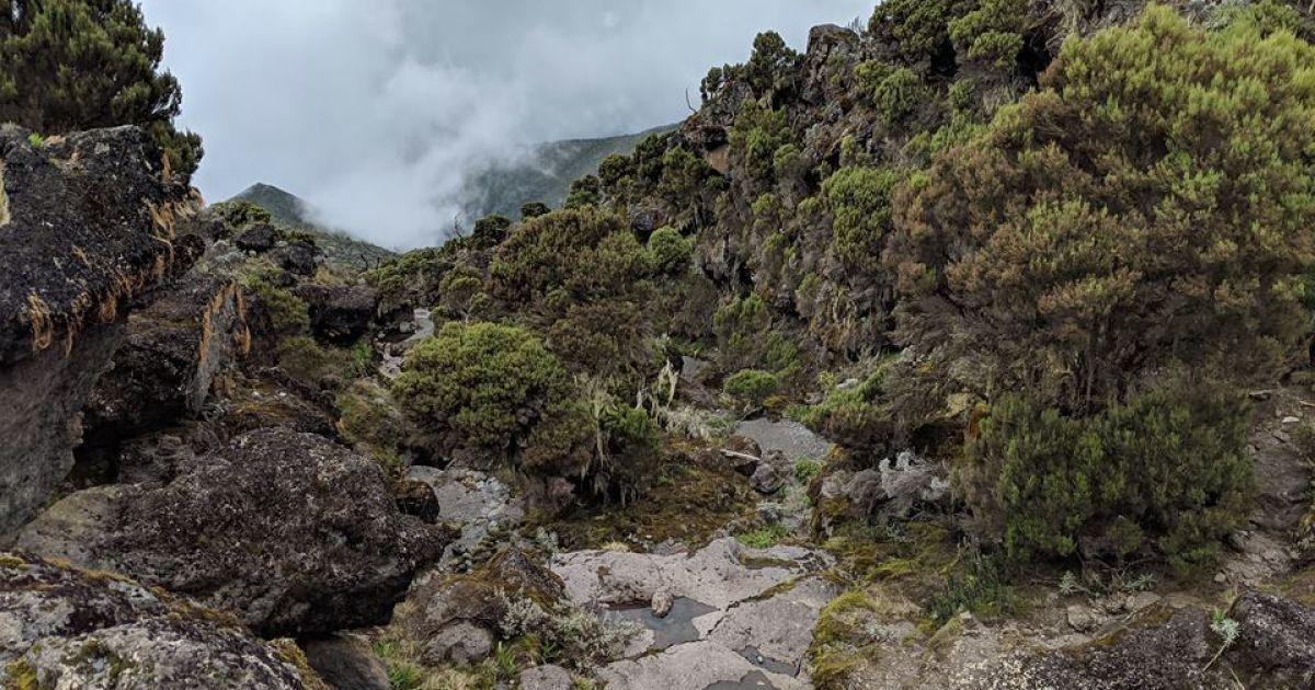 Перший день Кіліманджаро: неочікувано складно