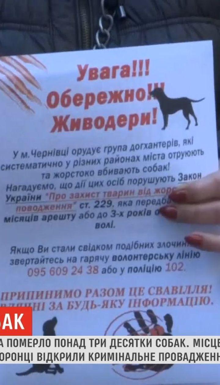 В одном из районов в Черновцах умерло более трех десятков собак