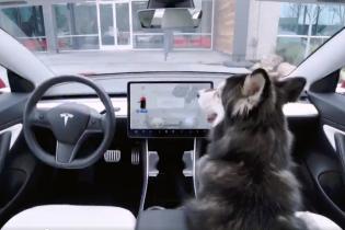 Электрокары Tesla получили важное для владельцев животных обновление