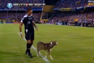 В Аргентині під час футбольного матчу пес вибіг на поле і щедро удобрив газон
