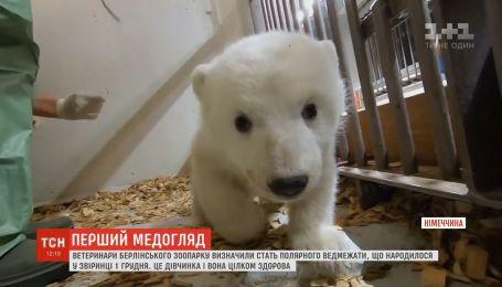У зоопарку Берліна визначили стать полярного ведмежати, яке народилося у грудні