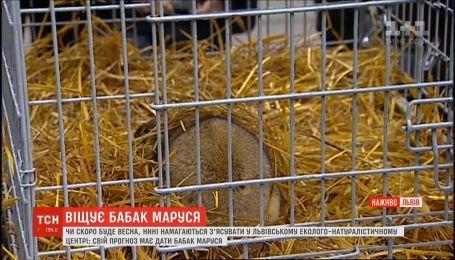 Скоро ли придет весна: прогноз от сурка Маруси