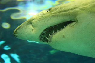 """Ученые """"обвинили"""" белых акул в мистическом исчезновении древних подводных гигантов мегалодонов"""