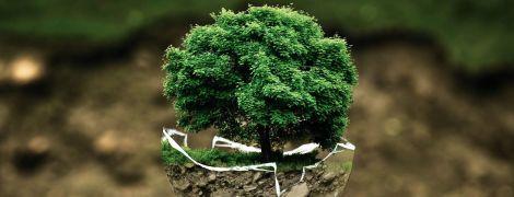 Земля значительно позеленела за последние 20 лет. Рассказываем, как это произошло и при чем здесь Китай
