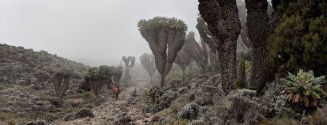 Третий день Килиманджаро: до 4600 м и обратно