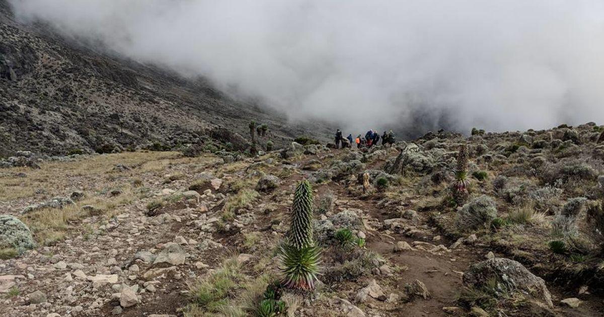 Третій день Кіліманджаро: до 4600 м і назад