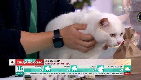 4-летний кот Том ищет семью