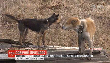 Концлагерь или спасение для собак: ТСН проверила приют под Новоград-Волынским