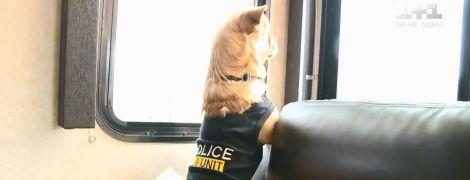 Врятованого після урагану песика взяли на роботу в поліцію Флориди