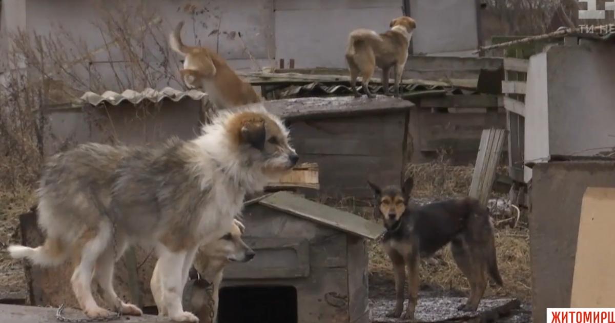Собачий концтабір. Під Новоград-Волинським пенсіонерка тримає тварин у багні і годує гнилою рибою