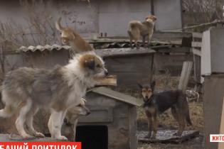 Собачий концлагерь. Под Новоград-Волынским пенсионерка держит животных в грязи и кормит гнилой рыбой