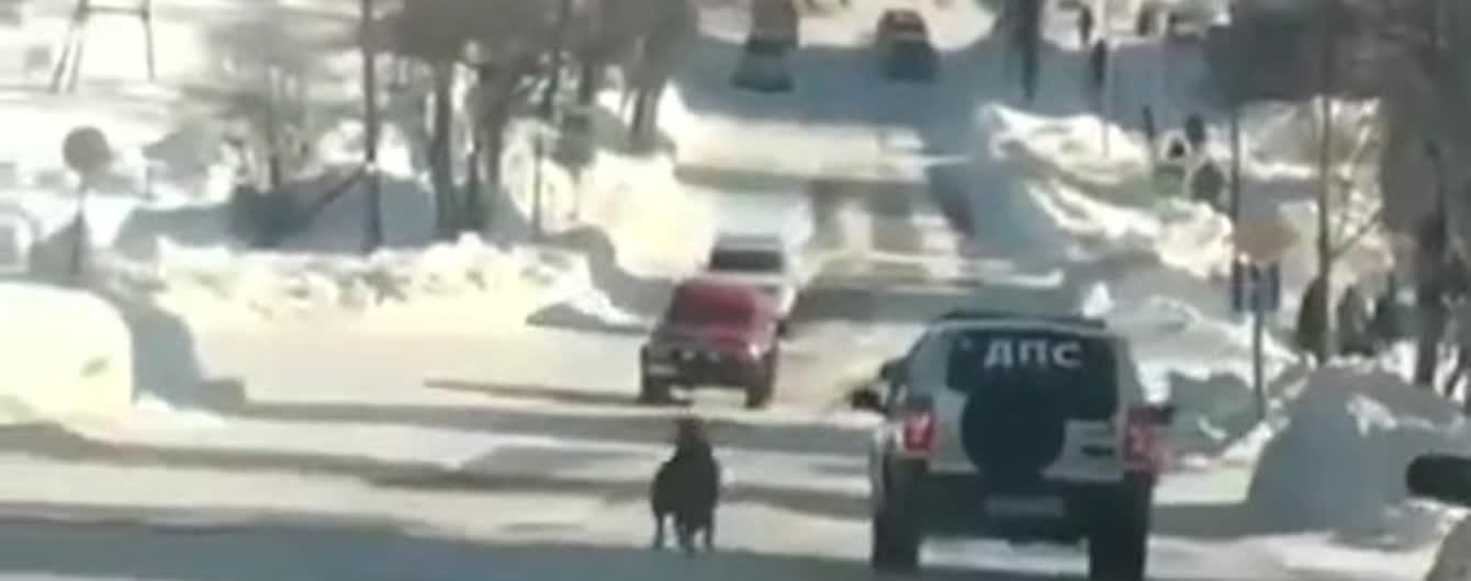 В РФ сняли на видео, как копы привязали собаку к машине и тащили по проезжей части