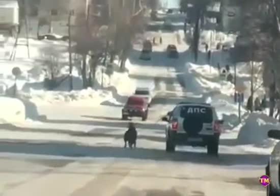 У РФ зняли на відео, як копи прив'язали собаку до машини і тягли проїжджою частиною