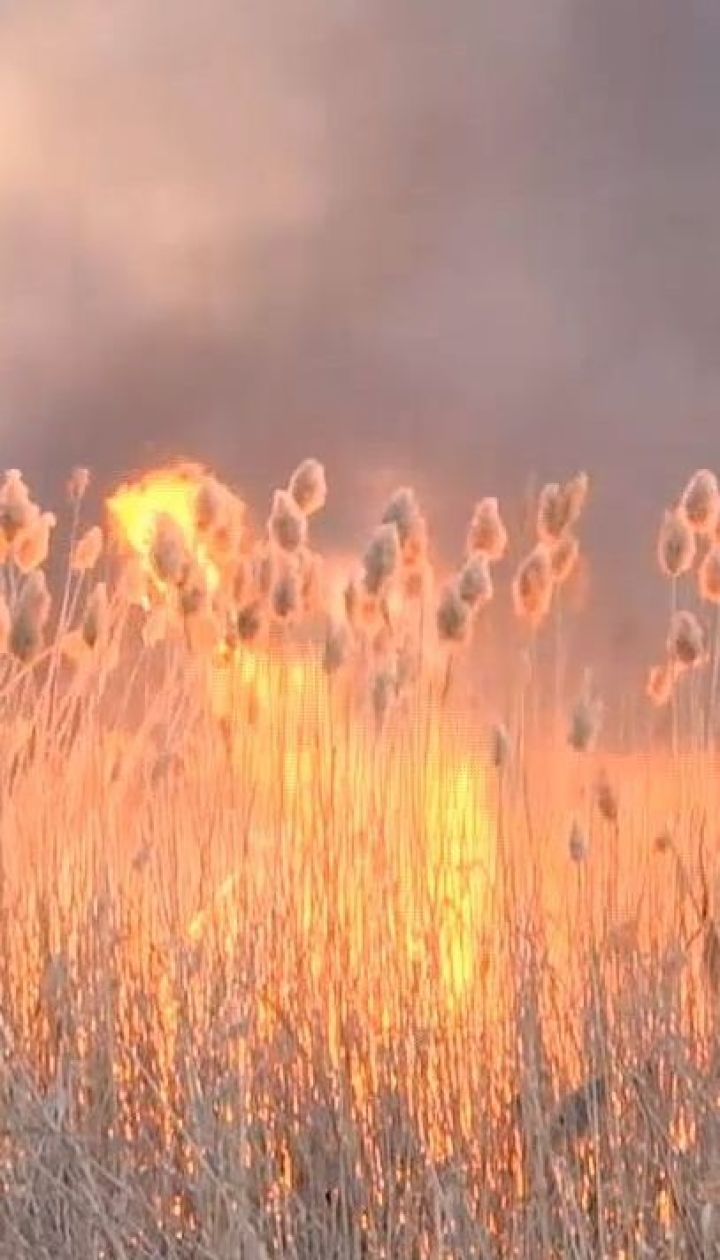 В Одесі рятувальники намагаються загасити вогонь на полях зрошення