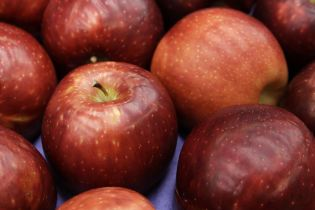 Україна продає свої яблука у 18 країн світу