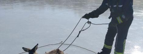На Донетчине спасатели помогли раненой косуле, которая застряла на льду