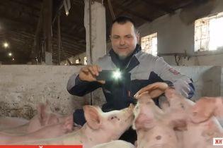 Фермер с Житомирщины на своем Youtube-канале рассказывает, как вырастить свиней и заработать на них