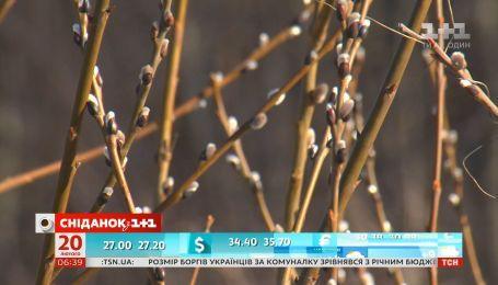 Як уберегти рослини від різких змін погоди