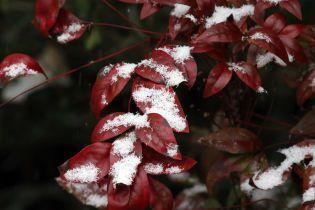 Раптову весну змінять 14-градусні морози. Як це переживуть рослини