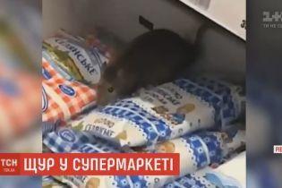 Рівненський щур в супермаркеті став зіркою Мережі