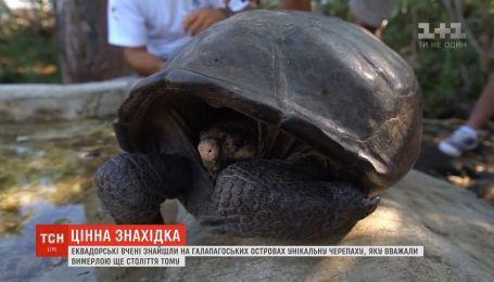 Ученые нашли черепаху, вид которой считали вымершей еще столетие назад
