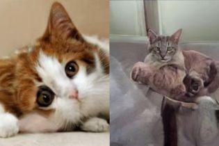 Нова нейромережа видає морди котів, яких не існує. Але вона погано дає раду