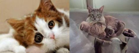 Новая нейросеть выдает морды несуществующих  котов. Но она плохо справляется